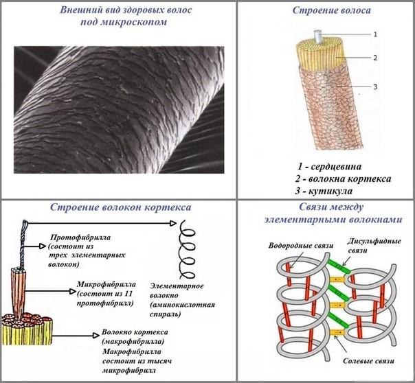Структура волоса - безопасно ли кератиновое выпрямление для волос?