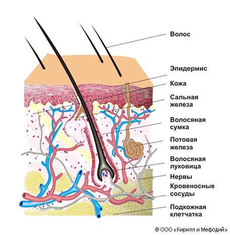 Как вылечить жирные волосы - строение кожи головы и причины проблемы